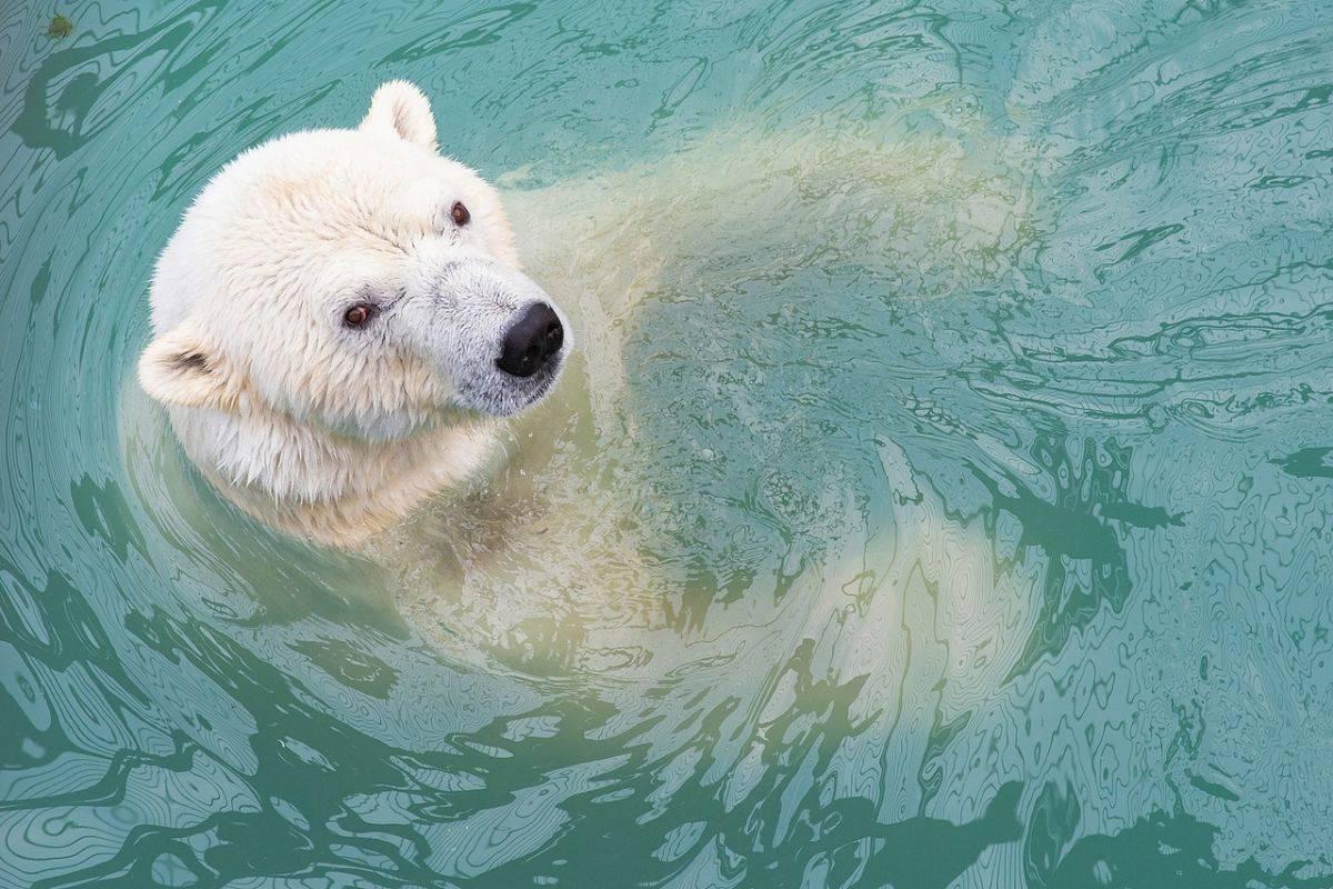 В «Роевом ручье» продлили купальный сезон для медведей