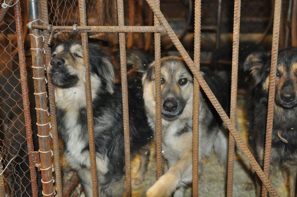 Почти 40 собак, спасенных при пожаре в норильском приюте для животных, находятся под наблюдением врачей