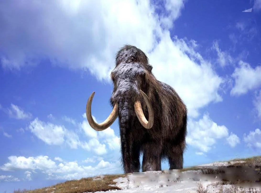 Бивень мамонта нашли на стройке аквапарка в Красноярске