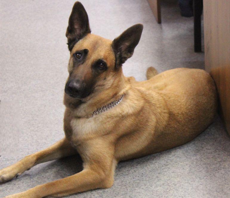 Единственная разыскная собака на Таймыре ушла на пенсию