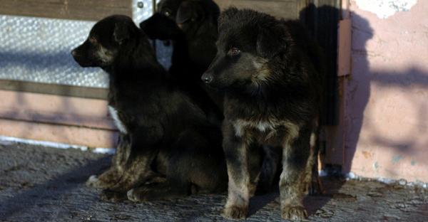 Отловом и содержанием беспризорных животных в Норильске займутся частные организации
