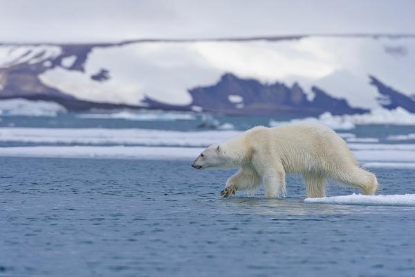 Арктику предлагают заново заморозить