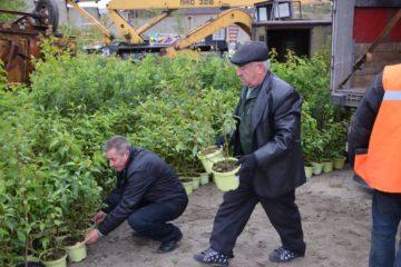 Более 2 млн. руб. направила КГМК на озеленение территорий присутствия компании