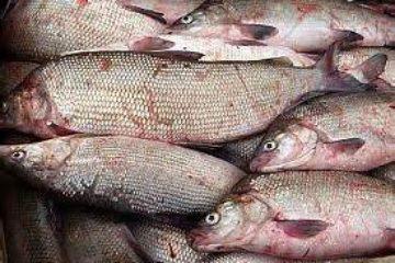 Жителя Дудинки подозревают в краже 60 кг рыбы из гаража