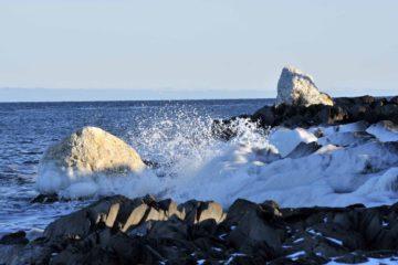 Международная конференция по биоресурсам и рациональному природопользованию в Арктике стартует в Норильске 1 апреля