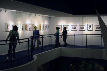 """Выставка """"ТаймырФотоГода-2017"""" работает в норильском музее"""