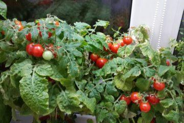 Норильчан зовут на конкурс городских огородников