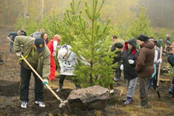 1000 деревьев высадят весной на площадках строящихся объектов Универсиады-2019