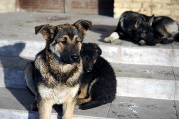 Карантин по бешенству животных продлится в Норильске до середины февраля