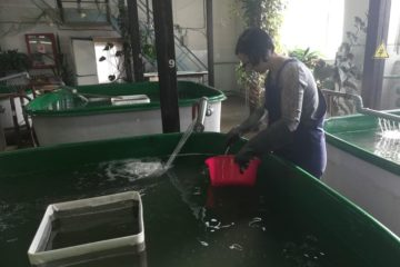 """""""Норильсктрансгаз"""" и Норильский рыбозавод выпустили 43,5 тысячи мальков хариуса в реку Енисей"""