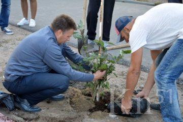 В Мончегорске озеленение города продолжается при поддержке Кольской ГМК