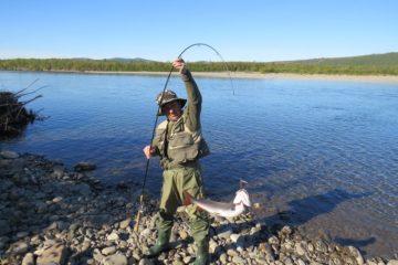 Самая полезная в мире рыба обитает в озерах севера Красноярского края