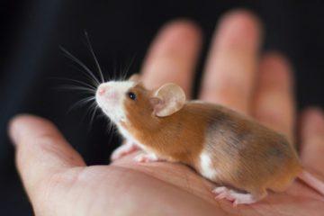В приюте «Даря надежду» появились три золотые и две серебряные мышки