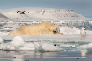 Норильчане могут  поучаствовать в стратегии развития Арктики