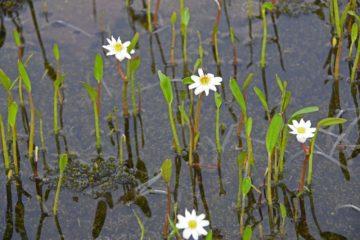 На озере Аян теперь растут березы, на плато Путорана – лютики