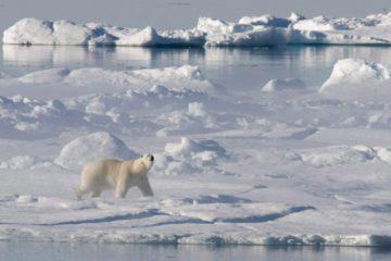 Лучшие проекты по развитию Арктики получат до 200 тысяч рублей
