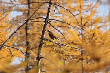 Осень на Таймыре