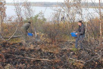 Сотрудники «Заповедников Таймыра» потушили пожар после туристов