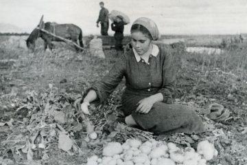 Когда в Норильске росли арбузы и дыни