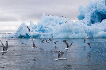 Институты развития Дальнего Востока и Арктики оптимизируют