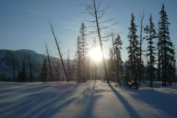У нганасан на календаре начался месяц «почернения деревьев»