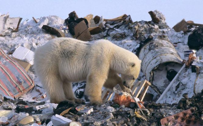 Сортировка мусора поможет избавить Арктику от пластика