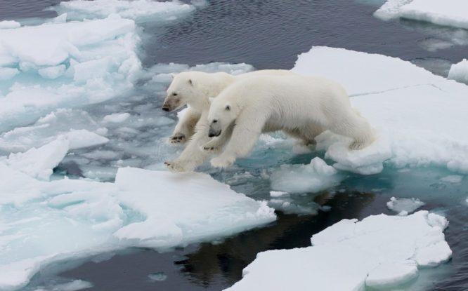 Льды Арктики тают в два раза быстрее, чем ожидалось