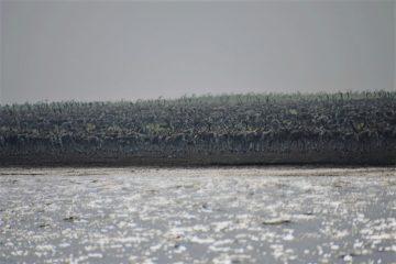 На Таймыре ученые сняли переправу 70 тысяч диких оленей через Хатангу