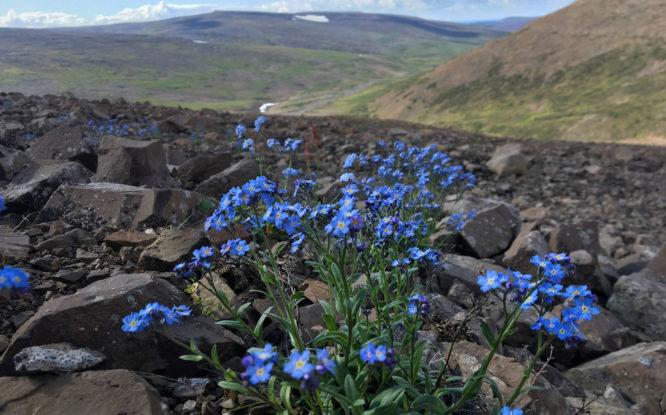 В России создали цифровую модель для мониторинга природы Арктики