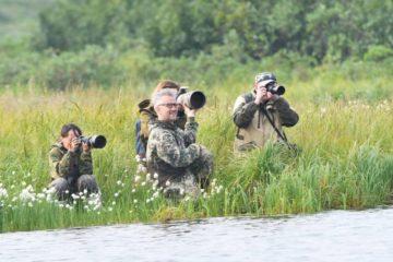 Норильчане-бердвотчеры увидели за выходные 20 видов пернатых Таймыра