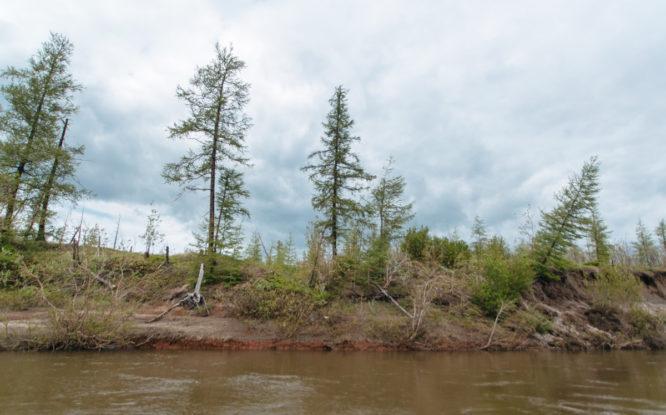 На Таймыре расследуют гибель 56 диких северных оленей
