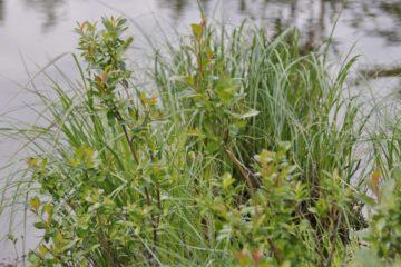 «Норильсктрансгаз» озеленил территорию возле поселка Тухард