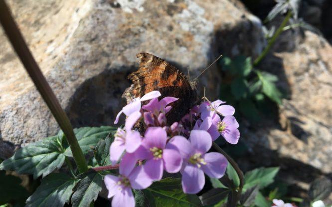 Большинство насекомых на плато Путорана еще не изучены