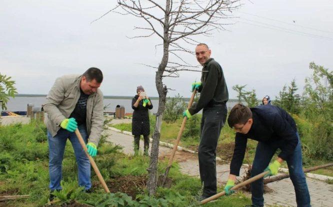 В Дудинке провели субботник и высадили деревья