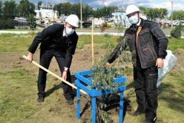 В Красноярске на месте пустыря появилась аллея Прокуроров