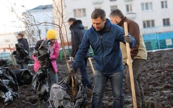 В Норильске высадили иву, березу и сибирскую ель