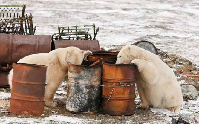 Арктику продолжают очищать от многолетнего мусора