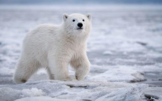 В тихоокеанской Арктике похолодало впервые за 20 лет